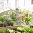 ikea-diy-greenhouse
