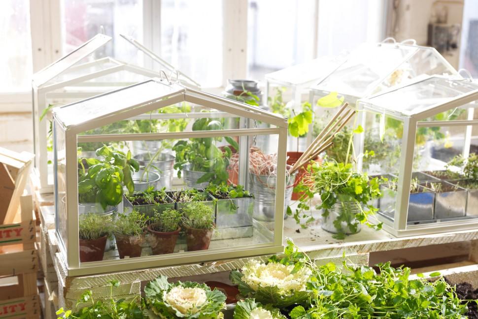 gallery for gt diy mini greenhouse ikea mini greenhouse royal copenhagen cups garden
